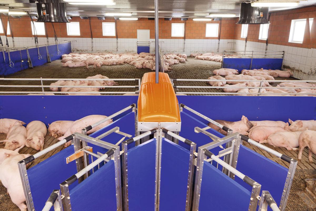 Big-Dutchman-Stalleinrichtungen-pig-equipment-TriSortpro-ganzer-Stall-ok